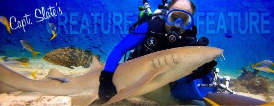 Capt Slate's Dive Center