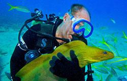 Slate moray