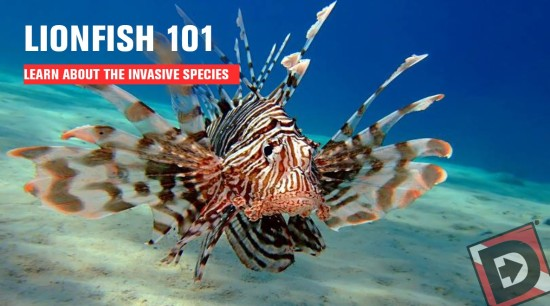 Divers Direct Lionfish 101
