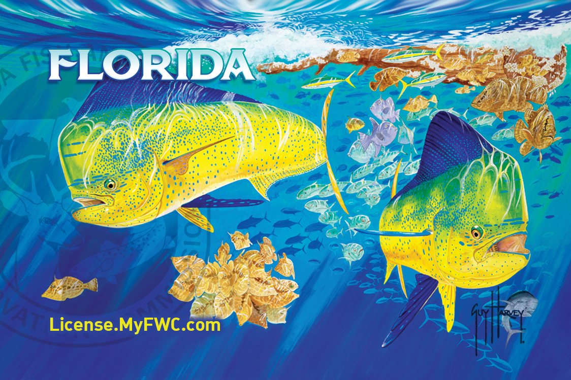 Guy harvey wallpaper hd wallpaper collections for Fishing license florida